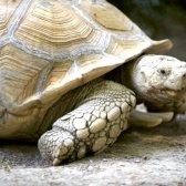 Як дихають черепахи