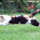 Як навчити кішку трюкам