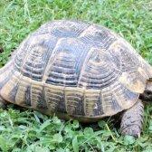 Як визначити вік і стать черепахи