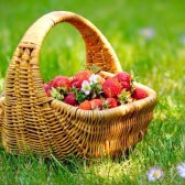 Як просто виростити полуницю з насіння