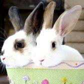 Як лікувати нежить у кролика