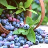 Як збирати ягоди в лісі