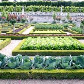 Як виростити овочі на своєму городі