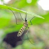 Чому кусаються комарі