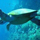 Чому вимерли Абінгдонскіе слонові черепахи
