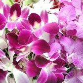 Як доглядати за орхідеями взимку