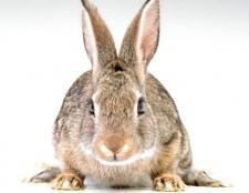 Як відрізнити хутро кролика