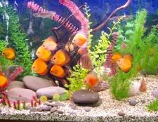 Як часто треба часто чистити акваріум