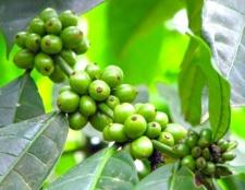 Як схуднути за зеленим кави