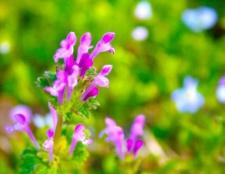 Як підвищити імунітет травами