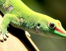 Як доглядати за ящірками