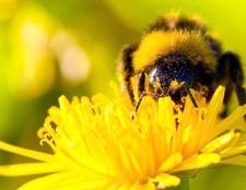 Як доглядати за бджолами