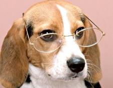 Як виховати розумну собаку