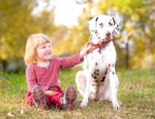 Як вибрати собаку для дітей