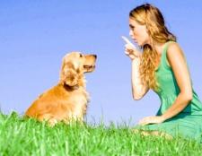 Як займатися з собакою