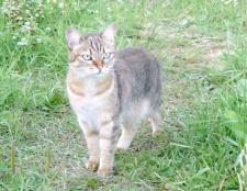 Як захистити садову ділянку від кішки