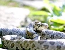Як захистити себе від укусу змії