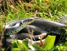 Як захистити себе від змій
