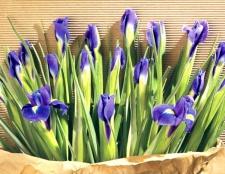 Які квіти можна дарувати чоловікам