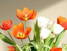 Як краще подарувати квіти дівчині
