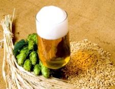Варимо домашнє пиво: рецепти пива