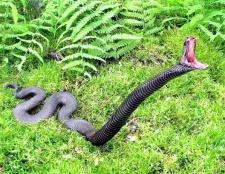 Як уберегтися від укусу змії