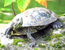 Як зробити тераріум для сухопутної черепахи