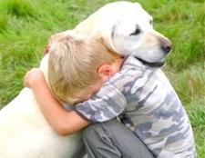 Собака - друг людини