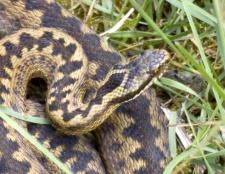 Як захиститися від змій